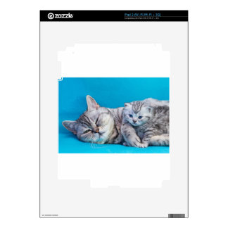 Mother cat lying with kitten on blue garments iPad 2 decals