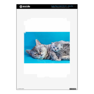 Mother cat lying with kitten on blue garments iPad 3 decals