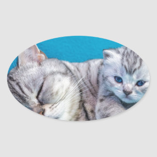 Mother cat lying with kitten on blue garments oval sticker