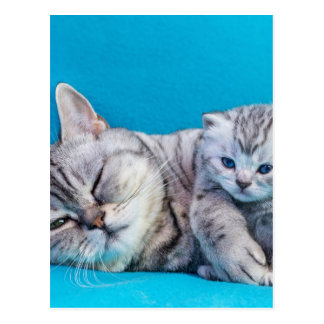 Mother cat lying with kitten on blue garments postcard