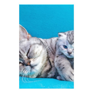 Mother cat lying with kitten on blue garments stationery