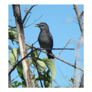 Mother Catbird Gathers Berries to Feed Babies Photo Art