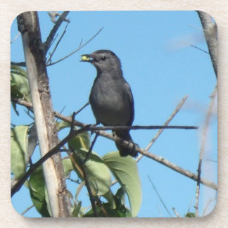 Mother Catbird Gathers Berries to her Feed Babies Beverage Coaster