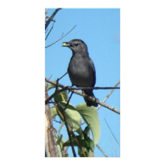 Mother Catbird Gathers Berries to her Feed Babies Card