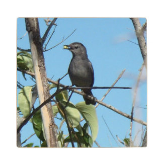 Mother Catbird Gathers Berries to her Feed Babies Wood Coaster