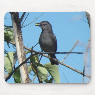 Mother Catbird Gathers Berries to her Feed Babies Mouse Pad