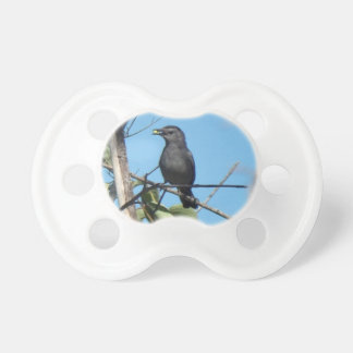 Mother Catbird Gathers Berries to her Feed Babies Pacifier