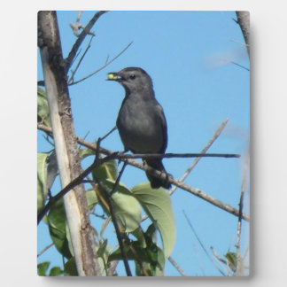 Mother Catbird Gathers Berries to her Feed Babies Plaque