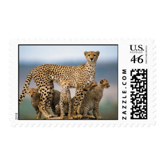 Mother Cheetah her Cubs Postage Stamp