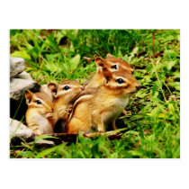 mother chipmunk and babies postcard