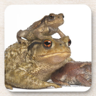 mother Common toad and her babies - bufo bufo Drink Coaster