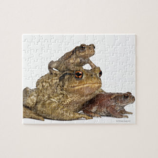 mother Common toad and her babies - bufo bufo Jigsaw Puzzles