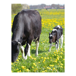 Mother cow and calf in meadow with yellow flowers letterhead