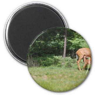 Mother Deer Feeds Her Babies 2 Inch Round Magnet