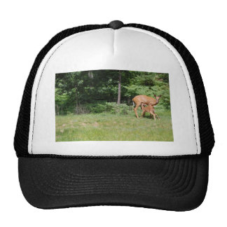 Mother Deer Feeds Her Trucker Hat