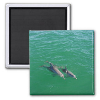 Mother Dolphin Swimming With Her Two Off-Springs Refrigerator Magnets