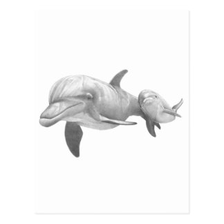 MOTHER DOLPHINS LOVE POSTCARD