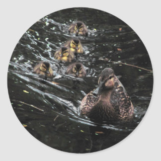 Mother Duck and Ducklings Go for a swim Classic Round Sticker