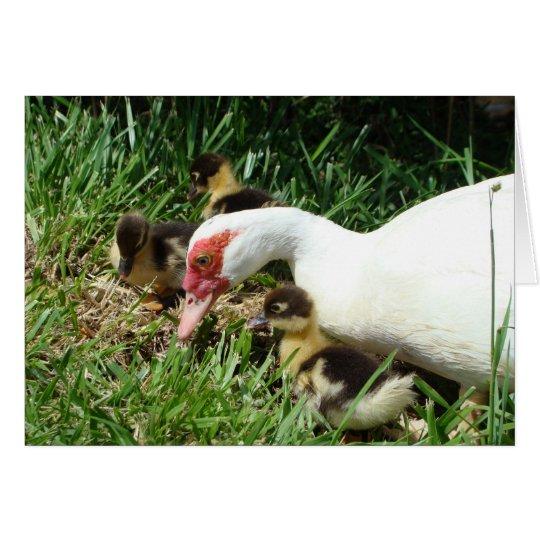 Mother Duck said Quack Quack Quack Card