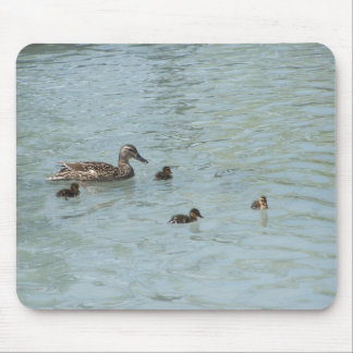 Mother Duck Teaching Swimming To Her Infants In Th Mouse Pad