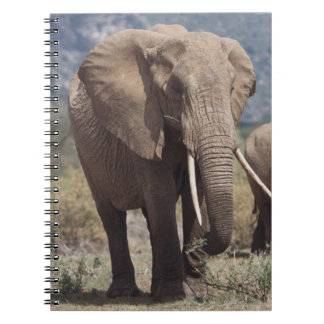 Mother elephant walking with elephant calf notebook