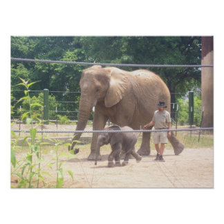 Mother Elephant with Baby and Zookeeper Poster