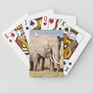 Mother elephant with young playing cards