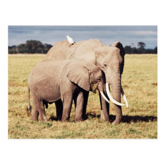 Mother elephant with young postcard