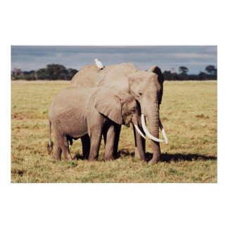 Mother elephant with young poster