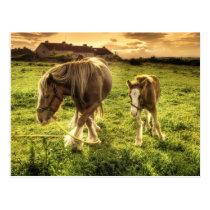 Mother & Foal Horse Postcard