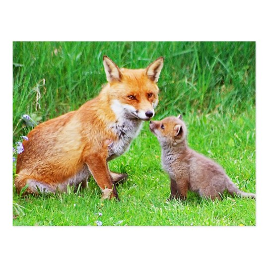 Mother fox and cub postcard