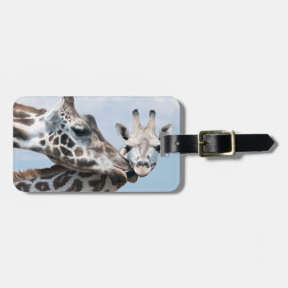 Mother giraffe kisses her calf tags for luggage