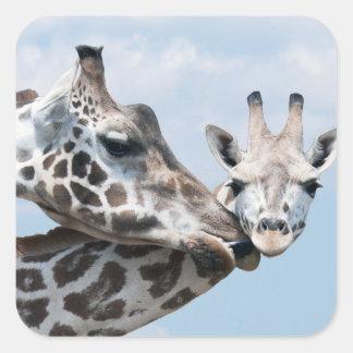 Mother giraffe kisses her calf square sticker