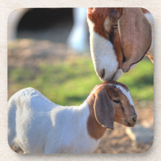 Mother goat kissing her baby on head. beverage coaster