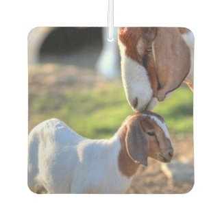 Mother goat kissing her baby on head. car air freshener