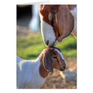 Mother goat kissing her baby on head. card