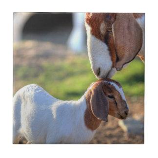 Mother goat kissing her baby on head. ceramic tile