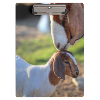 Mother goat kissing her baby on head. clipboard