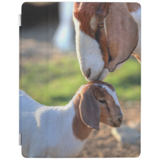 Mother goat kissing her baby on head. iPad smart cover