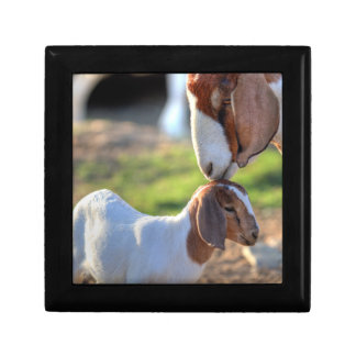 Mother goat kissing her baby on head. jewelry box