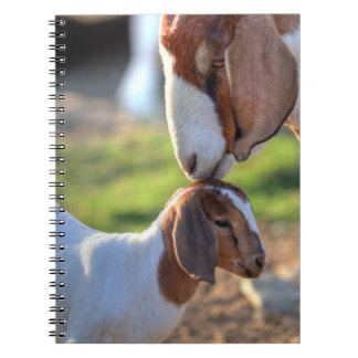 Mother goat kissing her baby on head. notebook