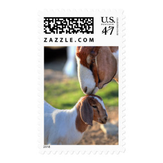 Mother goat kissing her baby on head. postage