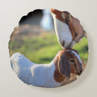 Mother goat kissing her baby on head. round pillow