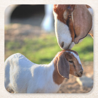 Mother goat kissing her baby on head. square paper coaster