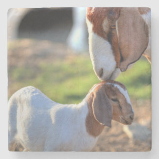Mother goat kissing her baby on head. stone coaster