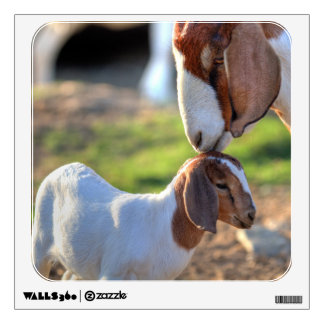 Mother goat kissing her baby on head. wall skins