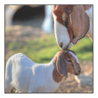Mother goat kissing her baby on head. wood wall art
