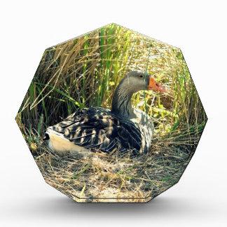 Mother Goose Acrylic Award