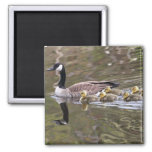 Mother Goose and Baby Geese Photo Refrigerator Magnet