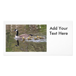 Mother Goose and Baby Geese Photo Customized Photo Card